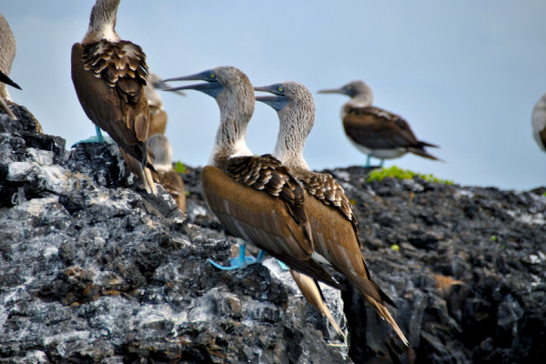 Che animali vedere alle Galapagos